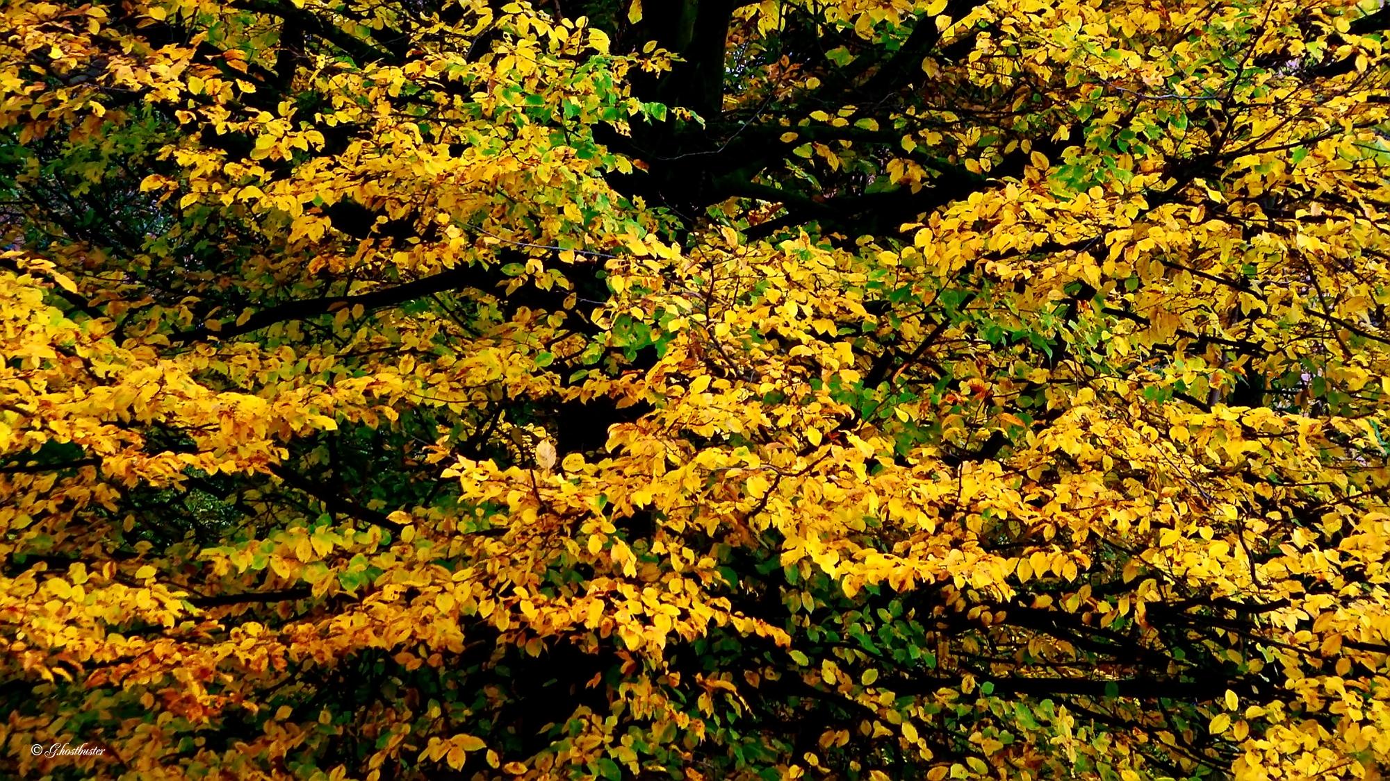 """Il titolo dell'autore """"Luga vita""""... perchè molte foglie qui non rinunciano ancora alla livrea estiva... (photo: Luigi Alloni)"""