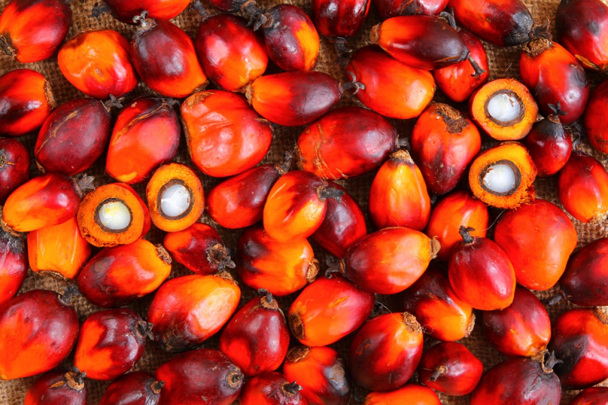 no all'olio di palma, sì al bio, è l'urlo di guerra delle mamme ai comitati mensa