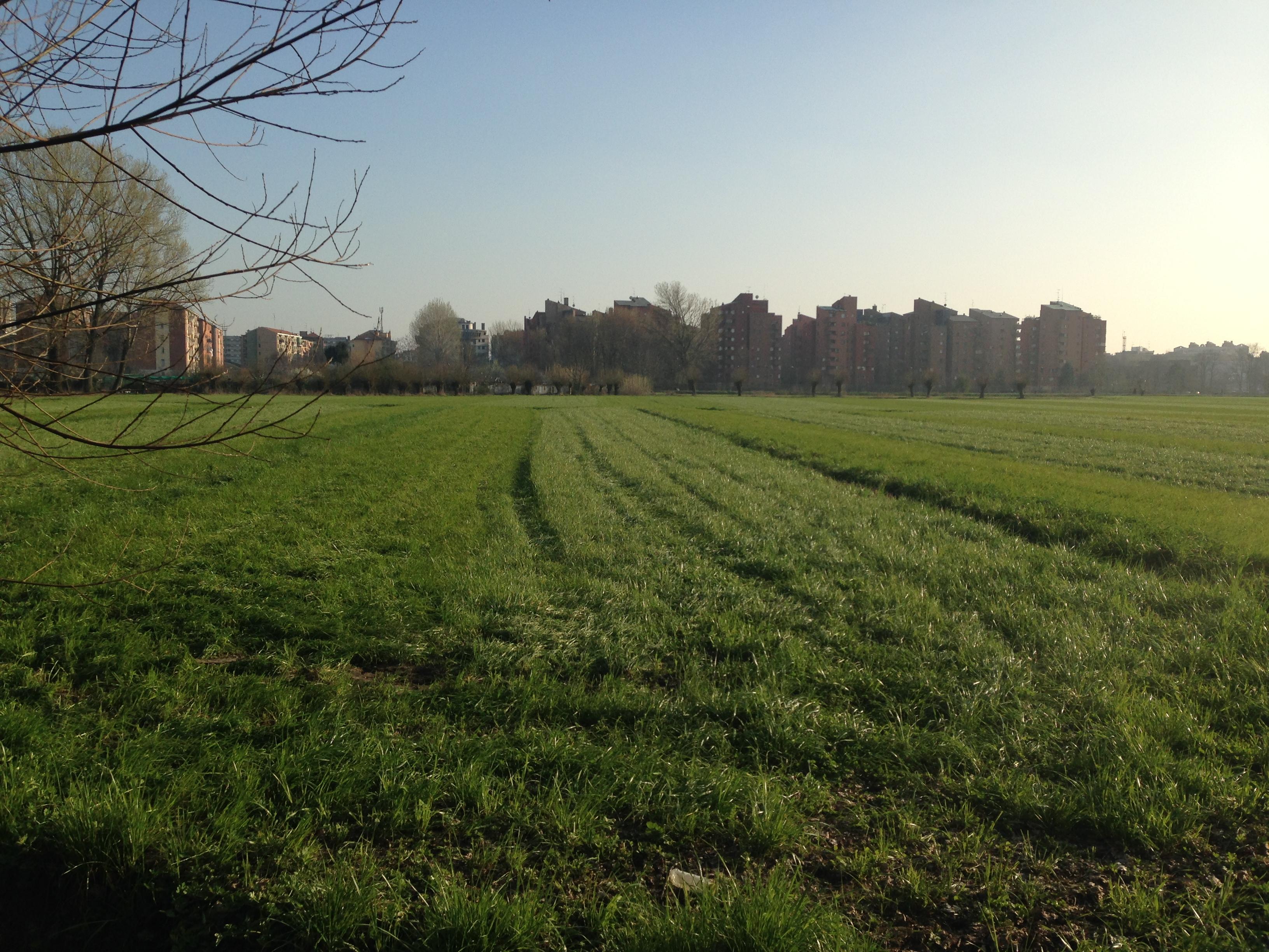 La città che erode la campagna, nei pressi della Cascina Linterno, a Milano (foto di Robert Ribaudo per Ciabattine)