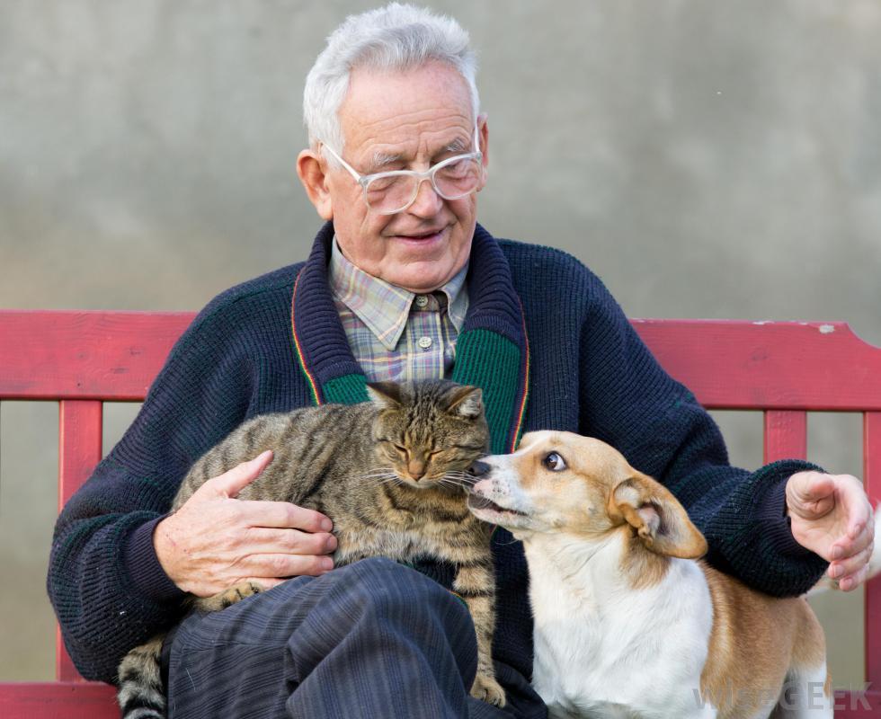 A Binasco c'è la prima residenza per anziani ove essi possano portare con sè i propri cani