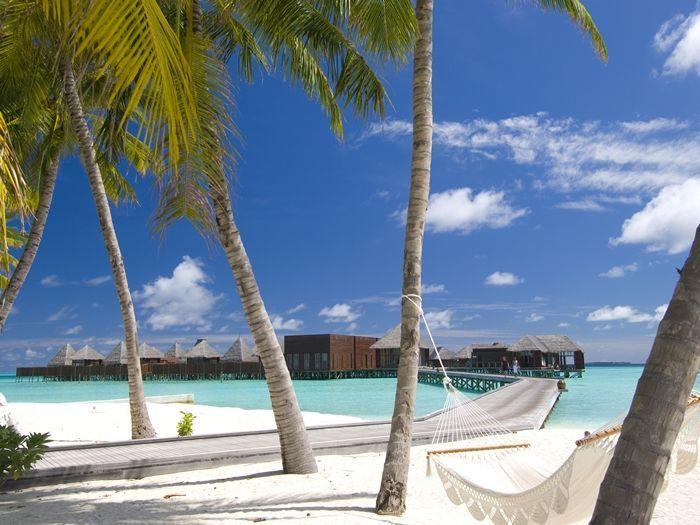 Questo sarebbe l'habitat dell'inesistente e temibile Topo delle Maldive (Bufala d'antan). Beato lui. (photo:Leggo.it)