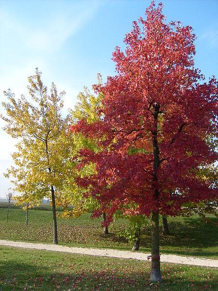 450px-autunno_in_un_parco_veneto