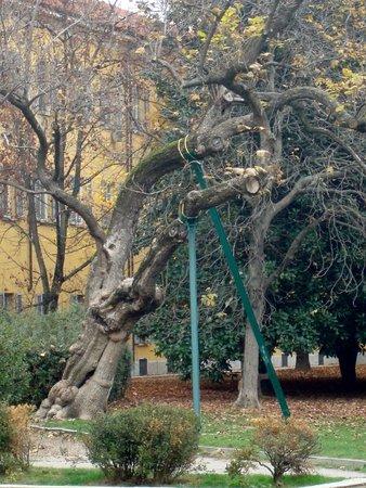 La vecchia catalpa (foto di fi_decorso da tripadvisor)