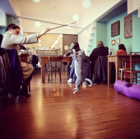 Un'immagine del Crazy Cat Café tratta dal sito web del locale