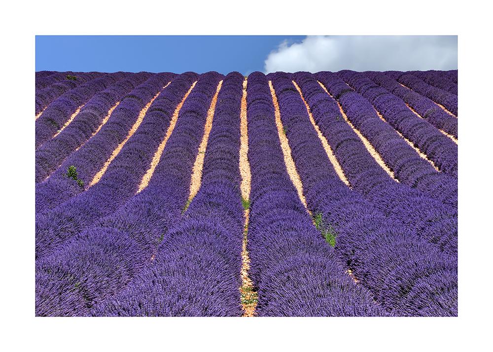 ondulex - Valensole - Provence